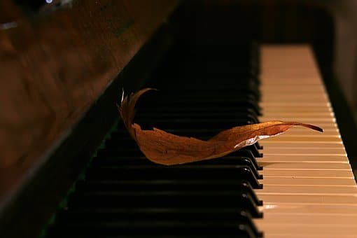 Feuille, Piano, Automne
